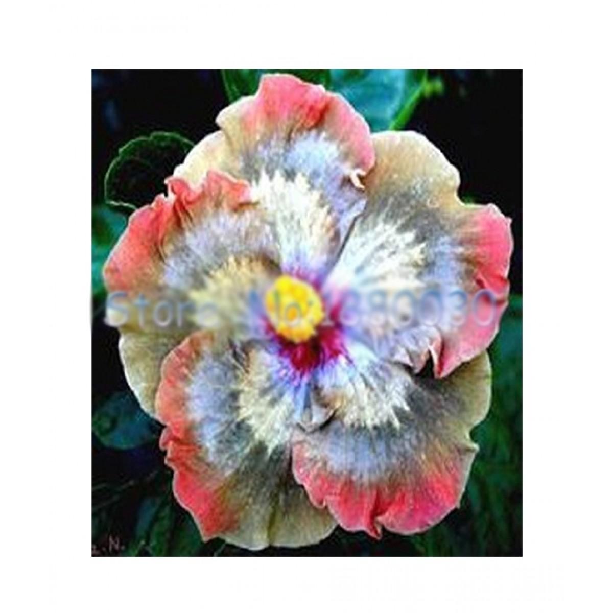 Husmah Hibiscus Multi Color Flower Seeds Price In Pakistan Buy