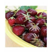 Husmah Strawberry Maroon Furit Seeds