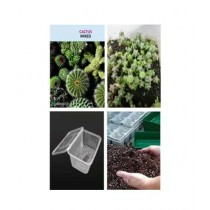 Diy Store Cactus Seeds with Germination Kit