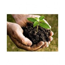 Diy Store Organic Powerful Fertilizer For All Plants