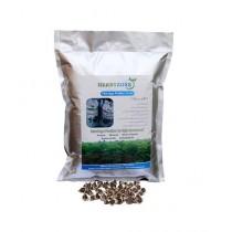 Herbyzone Moringa Fodder Seeds