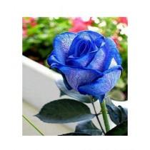 HusMah Blue Veins Rose Seeds