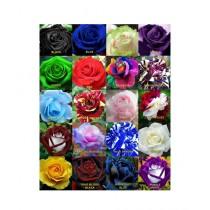 HusMah Worlds Rarest Mix Rose Seeds
