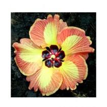 HusMah Yellow Orange Hibiscus Seeds