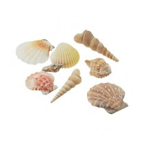 SubKuch Sea Shells Mixed Pack Of 20 (B 13, P 20)